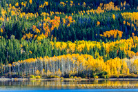 Aspen Trees - Twin Lakes