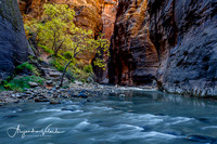 The Narrows - Zion Natl. Park