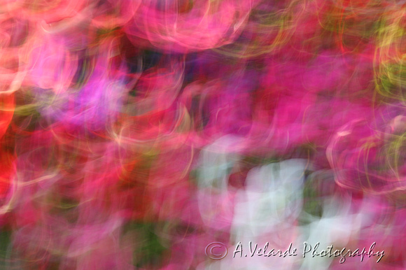 Flowers in Motion